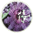 "<a href=""http://www.euromed.es/euromed/passion-flower-dry-extract/"">Passion Flower Dry Extract</a>"