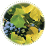 "<a href=""http://www.euromed.es/euromed/grape-seed-extract/"">Grape Seed Extract</a>"