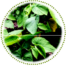 """<a href=""""https://www.euromed.es/euromed/pygeum-extract/"""">Pygeum Extract</a>"""