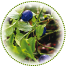 "<a href=""https://www.euromed.es/euromed/bilberry-dry-extract/"">Bilberry Dry Extract</a>"