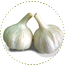 "<a href=""https://www.euromed.es/euromed/garlic-extracts/"">Garlic Extracts</a>"