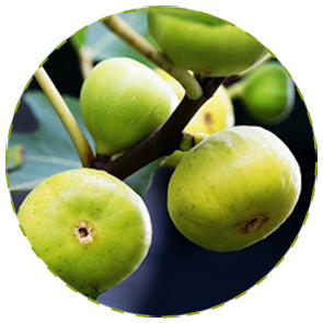 "<a href=""https://www.euromed.es/euromed/abalife/"">Fig Fruit Extract</a>"